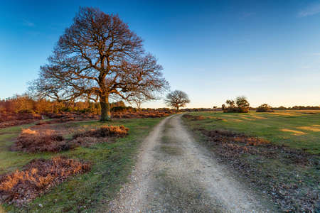 A track at Mog Shade in the New Forest National Park in Hampshire Stock fotó