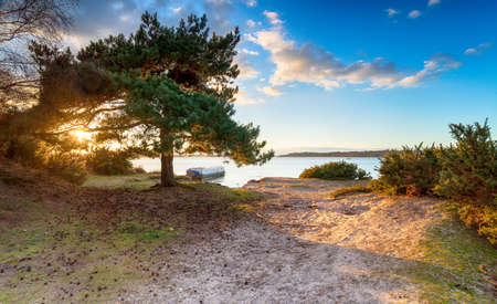 Dreamy sunset over a Scots Pine tree at Bramble Bush Bay at Studland in Poole Harbour in Dorset Stock fotó