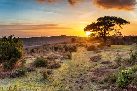 Dramatic sunset over the New Forest National Park at Bratley View near Lyndhurst in Hampshire