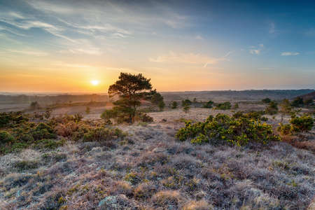 Beautiful sunset over Winfrith Heath in the Dorset countryside