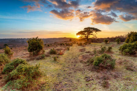Stunning sunset over Bratley View in the New Forest National Park in Hampshire