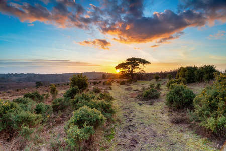 Stunning sunset over a Scots Pine tree at Bratley View near Lyndhurst in the New Forest National Park in Hampshire Stock fotó