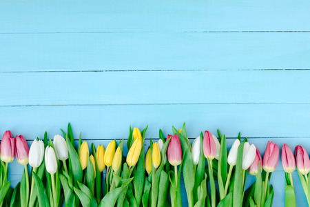 spring, tulips Standard-Bild