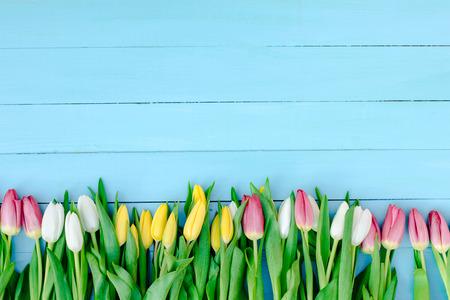 spring, tulips Archivio Fotografico