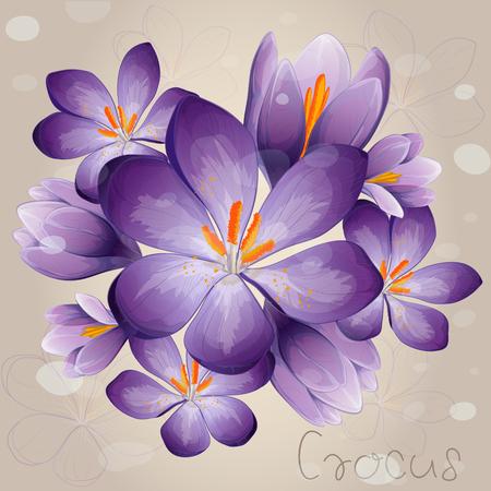 Romantic lilac Crocus Vettoriali