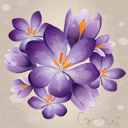 Romantic lilac Crocus 矢量图像