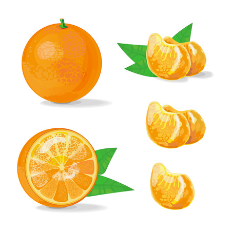 dewdrop: Vector Composition of Orange and Slice with leaves on transparent background. Juicy tropical fruit, slices of mandarin. Vector Illustration