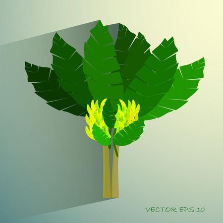 Ecological Concept, A Beautiful Tropical Banana Tree with Bananas and Banana Blossom Vector