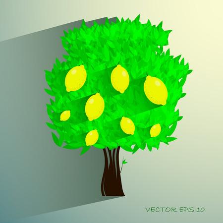 lemon tree: lemon tree isolated on White background. Vector illustration eps 10