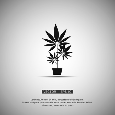 cannabis sativa: Black symbol growing marijuana. Vector eps 10