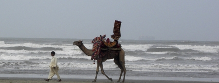 PAKISTANKARACHI_EMPTY CAMEL RIDE WALKING IN BEACH WITHOUT RIDER AT KARACHI SEA VIEW. TODAY ON THURSDAY 6 SEPTEMBER  2012                               Editorial