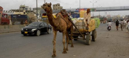 karachi: PAKISTANKARACHI_ CAMEL PULLING CART ON ROAD TODAY ON TUESDAY 18 SEPTEMBER 2012 IN KARACHI MAURIPUR ROAD