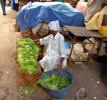 financal: KARACHIPAKISTAN_DAILY VEGETABLE SELLER ARRANGING SPINACH BUNDLE IN EARLY MORNING.TODAY ON SATURDAY 19 JANUARY 2013                                  Editorial