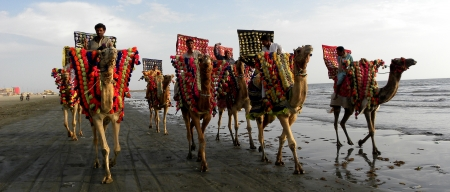 karachi: KARACHI,PAKISTAN : GROUP OF CAMEL RIDERS Editorial