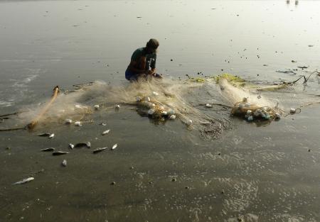 KARACHI PAKISTAN_FISHERMAN COLLECTING FISH FROM FISH NET AT SEA VIEW CLIFTON BEACH KARACHI WEDNESDAY 28 AUGUST 2013