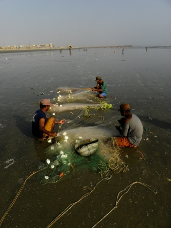 KARACHI PAKISTAN_FISHERMEN COLLECTING FISH FROM FISH NET AT SEA VIEW CLIFTON BEACH KARACHI WEDNESDAY 28 AUGUST 2013