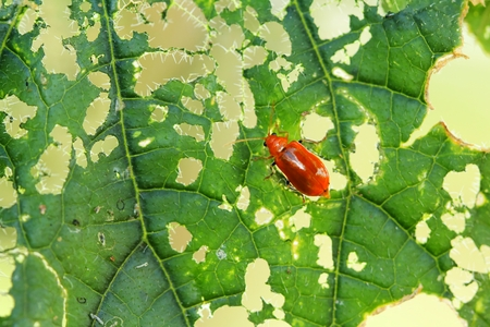 foliar: bug eat on leaf foliar