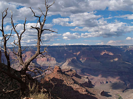 treed: Scenic view of a dead tree at the top of the Grand Canyon in Arizona