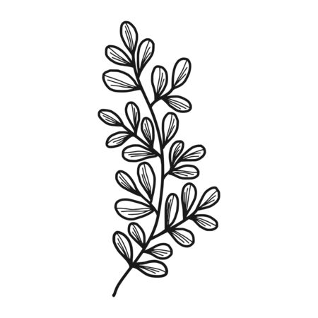 Vector designer elements set collection of green forest fern, tropical green eucalyptus greenery art foliage natural leaves herbs in hand drawn style. Decorative beauty elegant illustration for design Ilustração