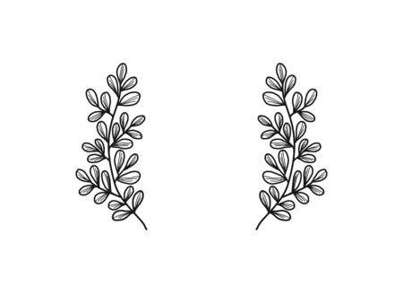 Hand drawn monochrome floral, leaf, and plant element Ilustração
