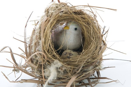 A bird brood in the nest