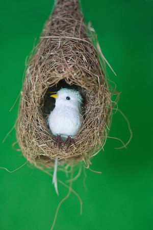 White bird in nest isolated on green Stock Photo
