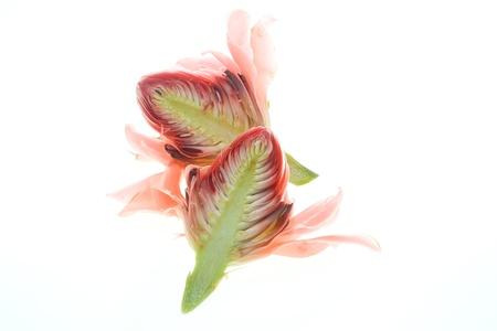 Ginger flower on white background