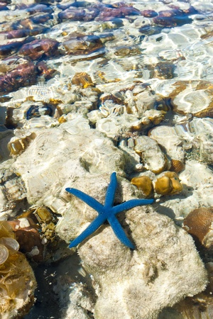 Blue starfish close-up. Sibuan Island