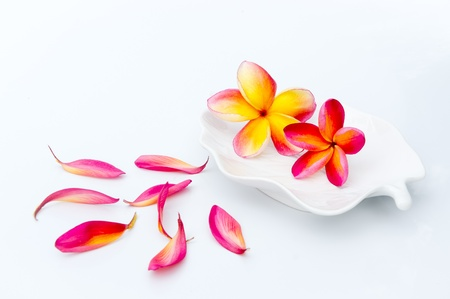 Tropical plumeria in white plate and flower petal