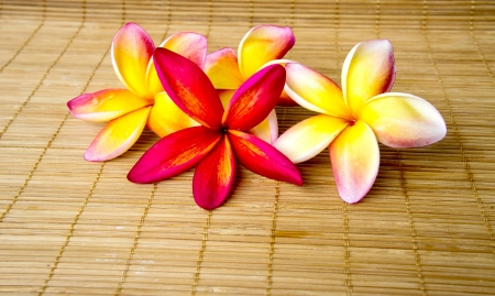 lei: Multiple color of plumeria flower on bamboo mat