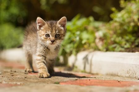 maldestro: Carino piccolo gattino grigio goffo sopra all'aperto