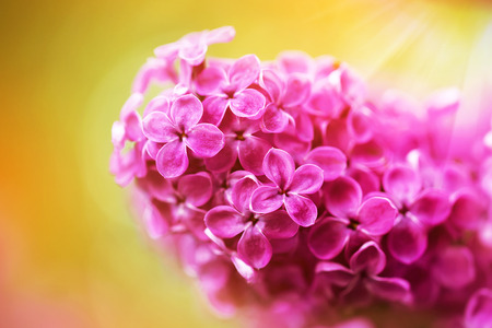 fragrant bouquet: Beautiful spring lilac flowers, outdoors, selective focus Stock Photo