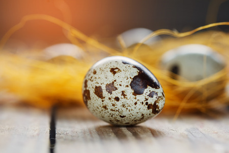 quail egg: Quail egg, closeup on wood background