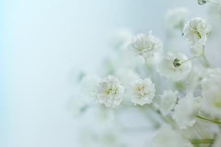Kleine witte bloemen Gypsophila paniculata wazig, selectieve aandacht Stockfoto