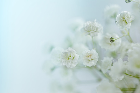 Small  White Flowers Gypsophila paniculata blurred, selective focus