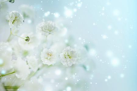 Kleine weiße Blumen Gypsophila paniculata verschwommen, selektiven Fokus.