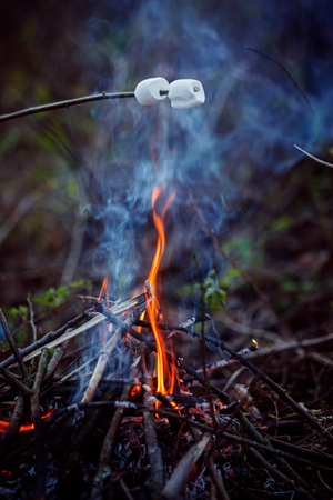 roasting: Roasting Marshmallows on bonfire n the forest