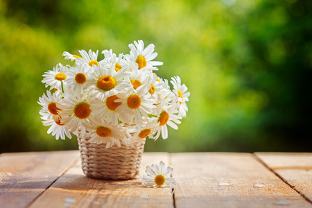 Bouquet of camomile flowers on wood table in nature green background, in summer morning. Imagens