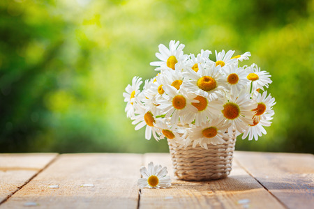 Bouquet of camomile flowers on wood table in nature green background, in summer morning. Stock Photo