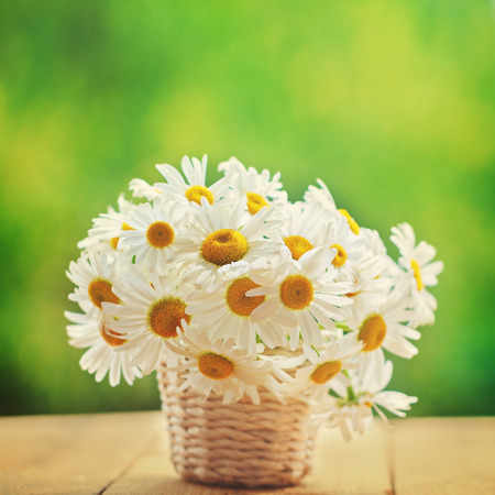 Chamomile, daisies bouquet, bouquet of flowers on green nature background. Bunch of daisy.