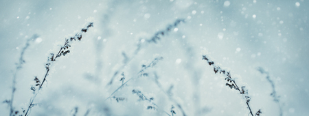 Winter nature background. Winter landscape. Winter scene. Frozen  flower Banner