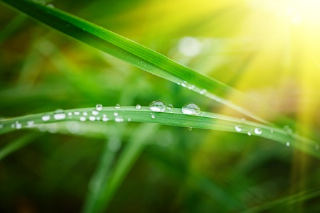Water Drops on the Green Grass. Nature abstract background. Selective focus on the drops. Stock Photo
