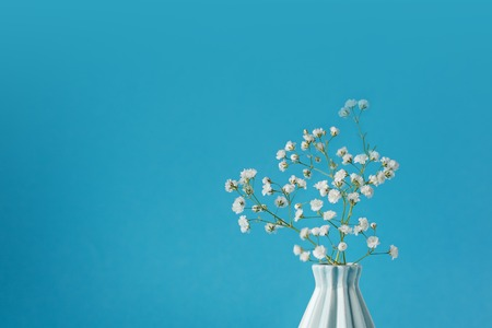 Closeup Babys breath - gypsophilia paniculata - in vase on blue background. Stock Photo