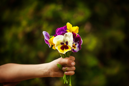 Child hand holding a bouquet pansies flower . Focus for flowers. Stock Photo