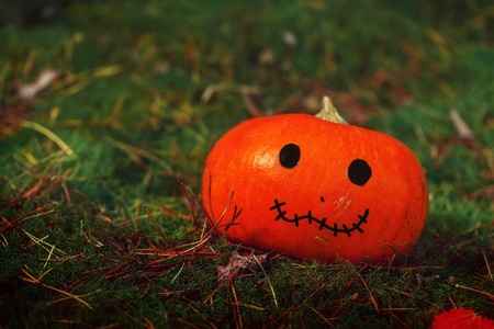 Halloween pumpkin on nature background. Holiday Halloween concept.