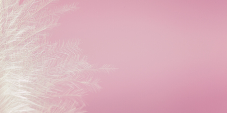 White feather of bird on pink background. Soft pink vintage color texture. Banner. 版權商用圖片