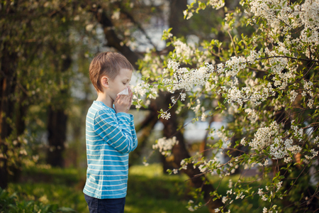 Allergy concept. Little boy is blowing his nose near blossoming flowers.