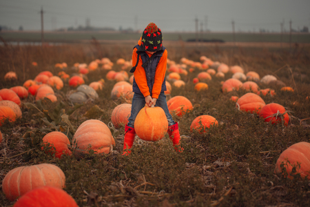 Cute boy picking out a pumpkin at pumpkin field at fall Stock Photo