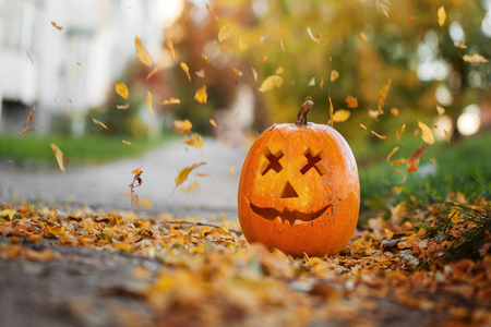 Halloween carved pumpkin in autumn leaves nature background Imagens
