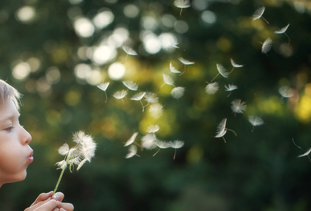 Portrait child outdoors in nature at sunset blowing a dandelion. Stock Photo